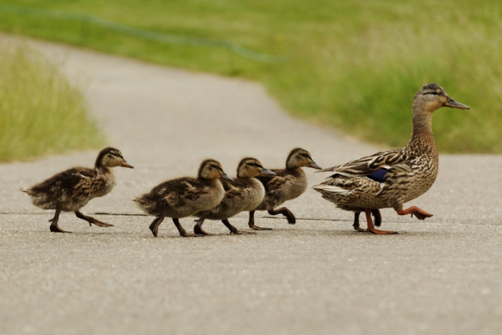 7 reasons why followers follow