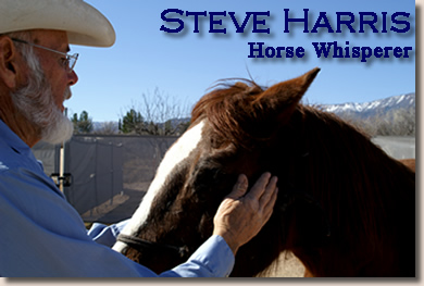 The Gentle Side of Force – 8 skills of leadership Iearned from my friend the horse whisperer